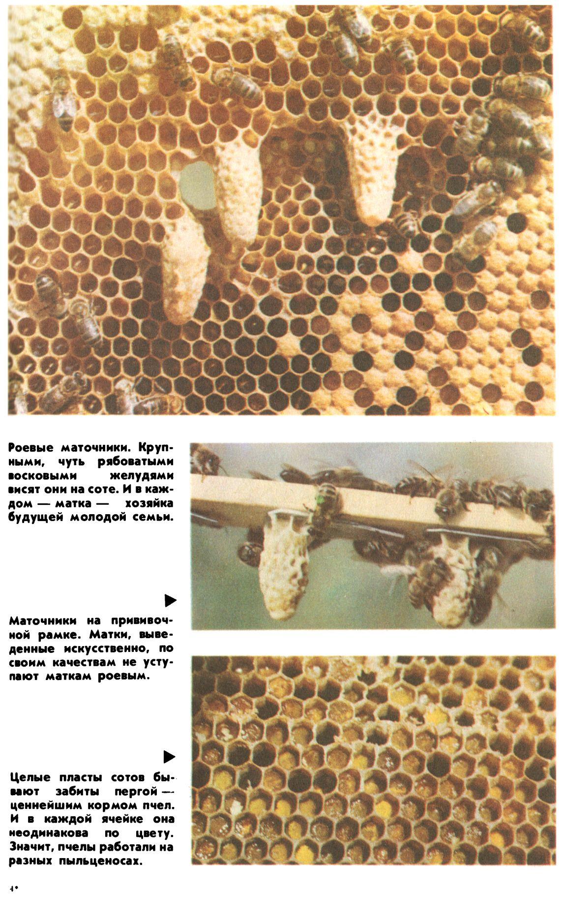 Как сделать отводок пчел Пасека. Пчелы. Мёд 54